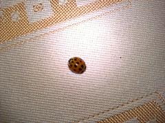 WP_20170317_17_24_32_Pro (vale 83) Tags: ladybird microsoft lumia 550 friends macrodreams wpphoto wearejuxt flickrcolour autofocus coloursplosion colourartaward beautifulexpression yourbestoftoday