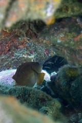 20150802-DSC_3572.jpg (d3_plus) Tags: sea sky fish beach japan scenery underwater diving snorkeling  shizuoka    apnea izu j4  waterproofcase    skindiving minamiizu       nikon1 hirizo  1030mm  nakagi 1  nikon1j4 1nikkorvr1030mmf3556pdzoom beachhirizo misakafishingport  1030mmpd nikonwpn3 wpn3