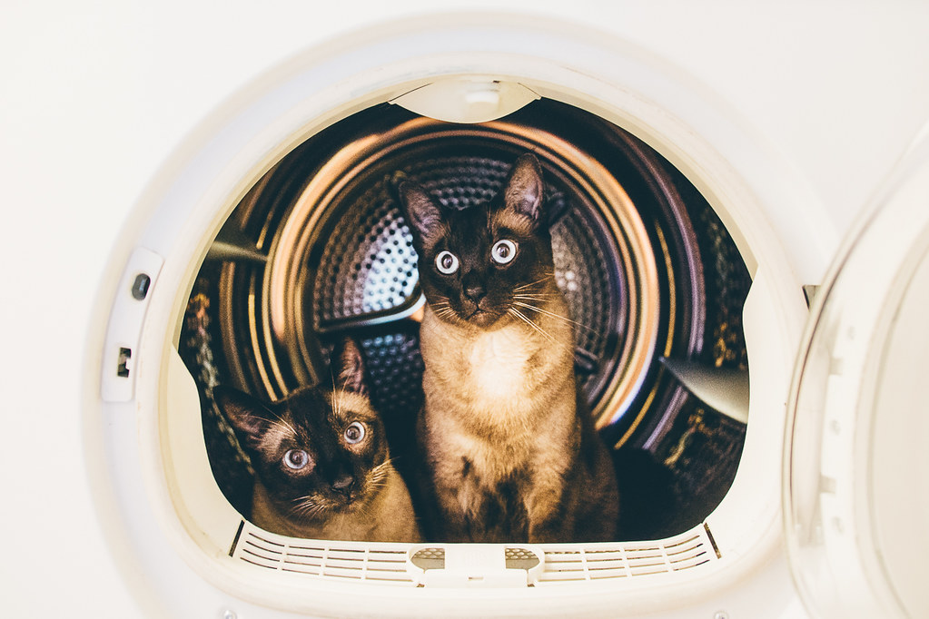 The World's Best Photos of pets and space - Flickr Hive Mind