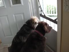 ** Chez Josée ** - 8 (Impatience_1 (moins active ad mars)) Tags: luna bonnie chien dog animaldecompagnie pet pitou bête animal canin canine m supershot coth coth5 impatience humour humor