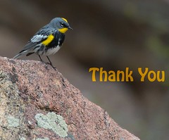 Thank You for inspiring me to explore! (The Shared Experience) Tags: usa bird wildlife co rmnp 2012 d800