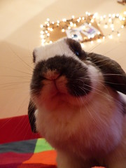 Hello :] (lori23cz) Tags: hello christmas autumn winter cute rabbit bunny love colors lights niky bunnylove