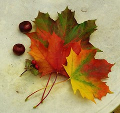 Autumn (helenoftheways) Tags: uk autumn stilllife london fall leaves colours berries conkers