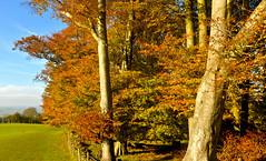 AUTUMN COLOUR (chris .p) Tags: uk autumn trees england colour nikon october view broadway cotswolds worcestershire cotswold 2015 d610