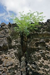 2015 04 22 Vac Phils g Legaspi - Cagsawa Ruins-53 (pierre-marius M) Tags: g vac legaspi phils cagsawa cagsawaruins 20150422