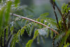 (Alice de Carvalho) Tags: green nature rain canon photography 50mm flickr chuva explore