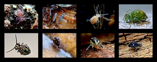 My Springtail Discoveries Thanks to Frans Janssens