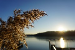 Seenlandschaft -  Krickenbecker Seen (photographie by jacobiclever) Tags: krickenbecker see seen lake nettetal stimmung wasser steg sonne sonnenschein sonnenuntergang sundown