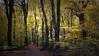 A magical Wednesday (sergeyashin) Tags: ifttt 500px yellow landscape forest nature magic fine art lightfall wallart autumn saskia dingemans