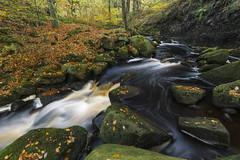 Burbage Brook (l4ts) Tags: landscape derbyshire peakdistrict darkpeak padleygorge burbagebrook longexposure autumn autumncolours autumnleaves