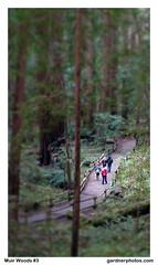 Muir Woods #3 (gardnerphotos.com) Tags: muirwoods california sanfrancisco nationalpark gardnerphotoscom redwoods route1 hwy1