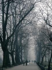 Walk in the park (Ania Mendrek) Tags: plenty park trees fog krakow poland cracow christmas winter foggy holidays visiting xmas city history architecture