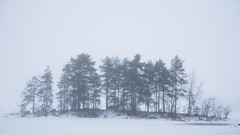 More fog (villesep) Tags: bright day finland finnish forest ice light nature outdoor savonlinna scandinavia snow suomi white winter
