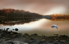 January First (floralgal) Tags: newyearsday2017 januaryfirst nature naturepreserve pond edithreadsanctuary ryenewyork newyorklandscape digitallandscape swanandducks duskinryenewyork