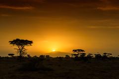 African sunrise, Ndutu, Tanzania, East Africa (diana_robinson) Tags: africansunrise ndutu tanzania eastafrica africa acaciatrees landscape morning mountain ngorongorocrater abigfave sunpeekingthrough sunrising dramaticsky
