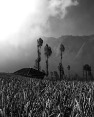 Cemoro Countryside (jonathan sander) Tags: jonathansanderphotography jonathan sander mountbromo indonesia bw blackandwhite travel photography canon java landscape