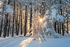 Snow star (romiana70) Tags: wharton brook state park outdoors snow sun star connecticut trees nature