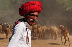 India-Rajasthan- Korta (venturidonatella) Tags: india rajasthan korta persone people ritratto portrait colori colors nikon nikond300 d300 pastore gregge baffi emozioni gentes shepherd streetportrait streetscene