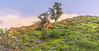 The green mountain in Granada Hills (MrSaha) Tags: green mountain granada hills california nikon d52000 dslr panaromic tall wide nature landscape manual earth top bright dim shadow light around view look travel happy life lively adventure globe world lonely peace peaceful calm quiet moment sharp clear soft beautiful capture red blue color colors vivid vibrant legend day sun sunny sky cloud clouds hill rocky rock tree leaves branches plants flower root grass hay