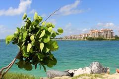 Miami (michaelakrejzková) Tags: miami beach big city exciting holiday sea most important