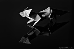 Just White Paper Fox (roseysnapper) Tags: bw denniswalker heliconfocus macromonday niksoftware nikkor105mmf28 nikond810 silverefexpro20 blackandwhite blackbackground closeup focusstack justwhitepaper hmm lightroom macro photoshop fox monochrome origami paper reflection shadow