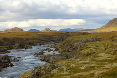 Eystri Rangá (Freyja H.) Tags: iceland southerniceland highland nature outdoor landscape eystrirangá river stream moss mountain cloud sheep icelandicsheep