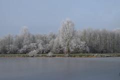 Frozen pond (DennisM2) Tags: ijs bevrorenmeertje frozenpond frozenlake ice winter