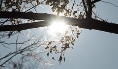 sunrise bokeh (Dotsy McCurly) Tags: sunrise sun sunlit backlit bokeh bubbles tree branches woods nature beautiful dof nikon d750 nj
