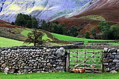 A load of walls (Lord Skully) Tags: drystonedyke rockfence stonefence boundry structure drystonehedge gate field grassland grass pasture mountainside mountainous hill hillside tree trees slope thelakes lakeland naturalbeauty countryside bucolic rural rustic rugged copeland allerdale westernfells westcumbria uplands unspoilt isolated remote outdoor outdoors landscape autumn october 2016 frankpickavant wall secluded farmland england britishisles britain europe uk unitedkingdom angleterre inghilterra inglaterra canoneos geotagged westernlakes northwest greatgable mountain westlakes enclosure partition barrier boundary poultry hens fowl domesticated bird heather gateway stones rocks scenery colourful