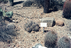 Desert Museum Saguaro NM AZ June 1976 (1).jpg (buddymedbery) Tags: years nationalparks arizona unitedstates saguaronationalmonument 1970s 1976
