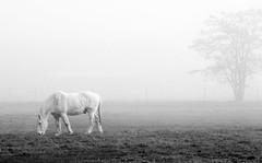 DSC01963 (billbetts2) Tags: 2016 nov fog hourse