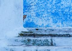 i'am watching you - je te surveille (A.B.S Graph) Tags: maroc morocco bleu oudaya oudaia rabat medina kasbah doors door gnaoui gnawi legnawi art style ciel sky ruelle rue street sale salé rbat cat lazy