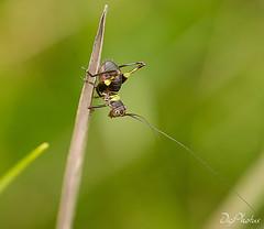 DSC_0037 (DigiPhotus) Tags: borboleta lagarta besouro bee gafanhoto esperança ovosdeinseto crisálida casulo mantis louvadeus cricket grilo macrodreams
