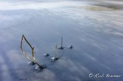 Noordhollands Duinreservaat Castricum (rob.bremer) Tags: noordhollandsduinreservaat noordholland castricum bakkum duinen dunes duinlandschap duingebied duinmeer meer lake landscape landschap kennemerduinen doornvlak