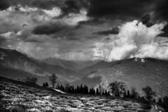 Temi tea Garden (Little Blezz) Tags: temi tea garden monochrome mountain himalaya cloud nature hilltop hill black white