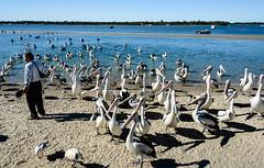 He May have Some Food (Jocey K) Tags: sky people seagulls pelicans water birds river boats sand labrador shadows australia queensland surfersparadise goldcoast triptoqueenslandbrisbane