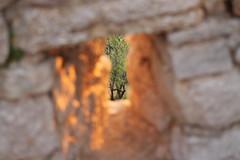 novigrad - strelna lina (lončo) Tags: lina novigrad strelna hrvaška obzidje