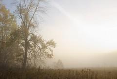 Familiar (wood_owl) Tags: morning autumn ohio mist tree fall nature field sunrise river dawn october mood atmosphere familiar cuyahogavalleynationalpark familial favoriteplaces sooc treesiveknown