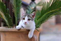 IMG_8623 () Tags: animal cat   meteora kastraki  canon6d monasteryofthegreatmeteoron