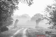 Hatfield_Forest-18 (Eldorino) Tags: park uk morning autumn trees nature forest sunrise landscape countryside nikon britain centre jour hatfield bishops stortford essex hertfordshire stanstead hatfieldforest