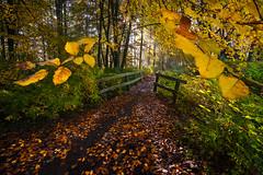 Autumn colours (PJAG83) Tags: bridge autumn trees sunlight tree leaves colours shadows beams twente sunbeams hakenberg samyang1220ncscs fujifilmxt10
