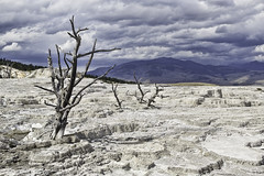 Desolate landscape (Alan Vernon.) Tags: park mountains hot water landscape scenery terraces scene national mammoth springs limestone yellowstone wyoming travertine desolate geothermal