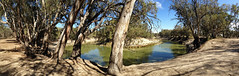 Darling River Bend Panorama (Kaptain Kobold) Tags: trees panorama water river landscape nationalpark view bend australia nsw darling eucalypts iphone menindee kaptainkobold yourfave kinchega