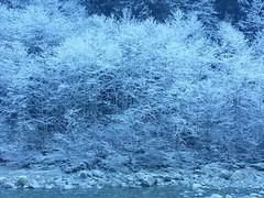 Hoar frost. Valley inversion, Statlu Creek. (Dru!) Tags: