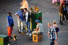 Marrakech /  (Morocco) - Jamaa el Fna (Danielzolli) Tags: monkey morocco maroc ape marrakech marruecos marokko schlange affe marrakesch jamaaelfna fna maymun djemaaelfna  maghrib jamaa majmun seinge almaghrib