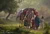 SHEPHERDS (TARIQ HAMEED SULEMANI) Tags: sulemani tariq tourism trekking tariqhameedsulemani travel theunforgettablepictures supershot sensational shepherds tree concordians culture colors winter multan