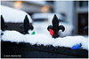 Shall We Have White Christmas? - Calder XP5845e (Harris Hui (in search of light)) Tags: harrishui fujixpro2 digitalmirrorlesscamera fuji fujifilm vancouver richmond bc canada vancouverdslrshooter mirrorless fujixambassador xt1 fujixcamera fujixseries fujix fuji35mmf2 fujiprimelens fixedlens standardlens snowy snowfall whitechristmas chritsmas holiday holidayseason closeup macro snow holidaylight decoration bokeh depthoffield