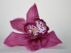 """Aubergine Cymbidium Orchid"" (A.J. Boonstra) Tags: cymbidiumorchid orchidee orchid canon70d canoneos canon falconeyesskk2150d falconeyessilverumbrella falconeyesreflector ef100mmf28lmacroisusm macro closeup"