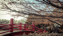 Little Red Bridge (Rohit KC Photography) Tags: red wood bridge japanese garden tree branches leaves dry bright edited sky canon ca california san jose canon5dmarkii 50mm f12 contrast brown park united states usa america