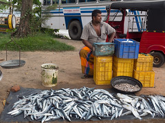 _B115757 Fish market in Galle.jpg (JorunT) Tags: makrell fisk galle srilanka 2016 utflukt sightseeing fiskemarked